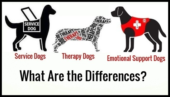 Three dogs are pictured - a service dog, emotional support dog, and a therapy dog. Below are the words 'What are the Differences?'